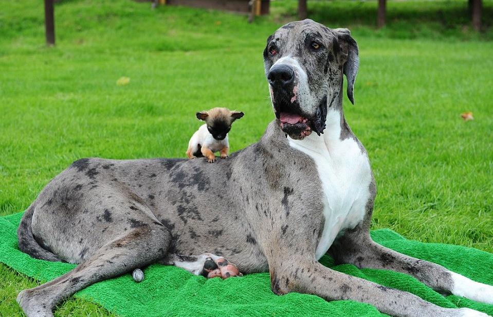 картинки собака самых маленьких в мире собак фотоателье использует современные