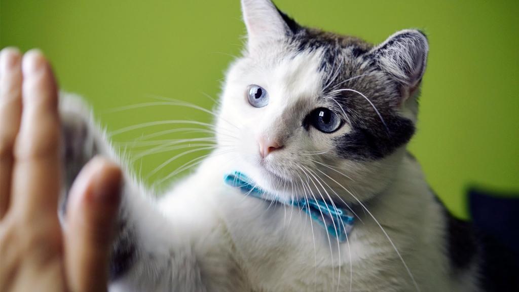 """Котик научился давать """"пятюню"""" и теперь делает это в спортивном зале"""