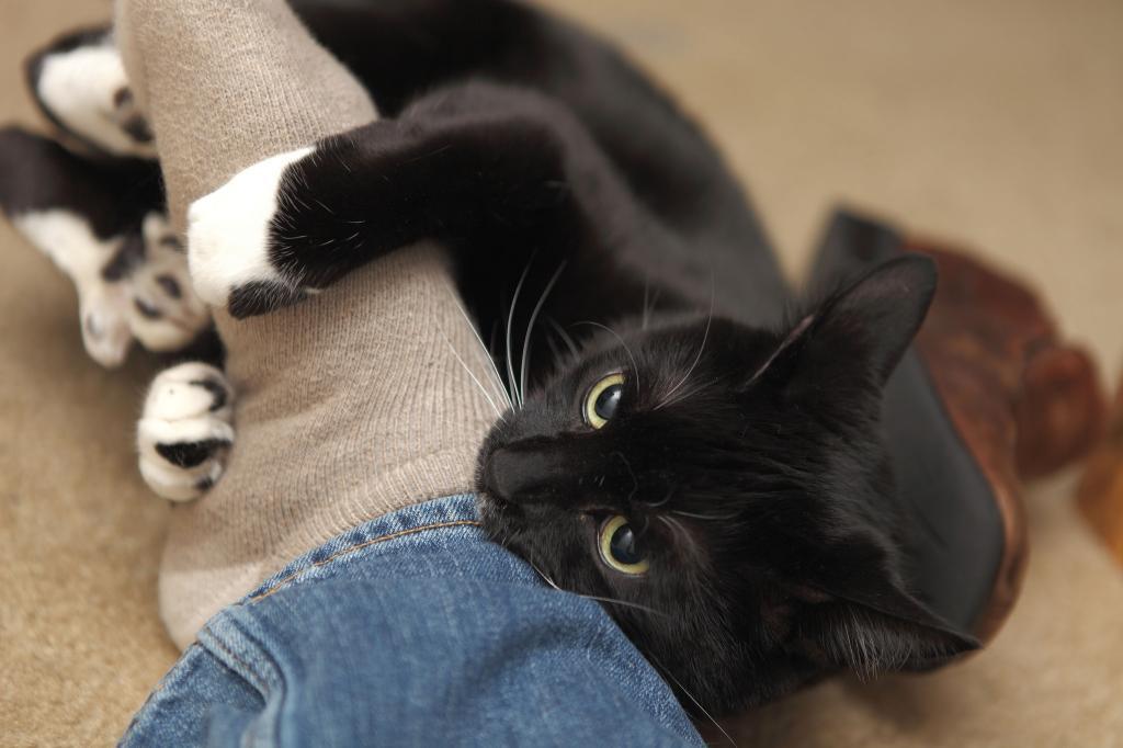 Коварные котики: ученые выясняют, почему они кусаются после ласки