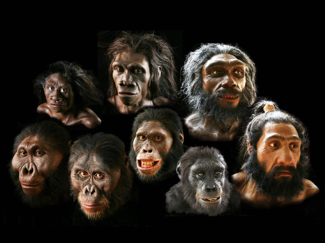 Фото прикол происхождение человека