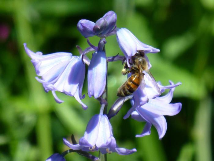 Видят ли насекомые сны thumbnail