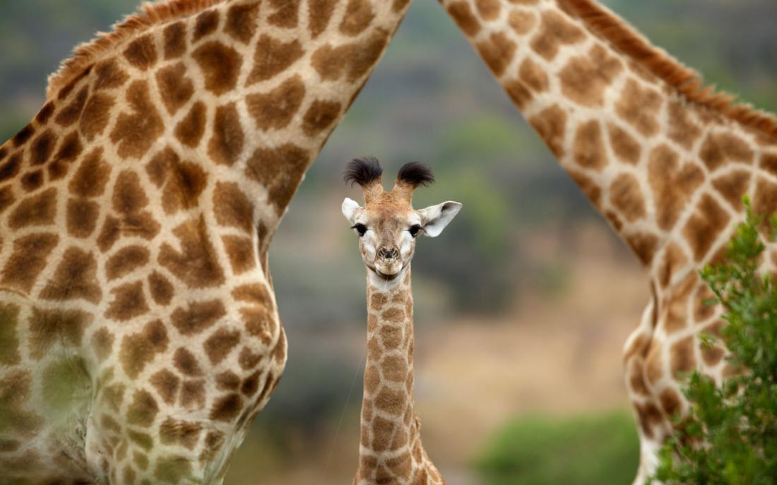 опубликовала нежное интересные факты о животных фото здоровье казенное, спина