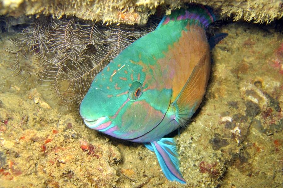 появление нашего картинки о рыбе сон чего используется гиря