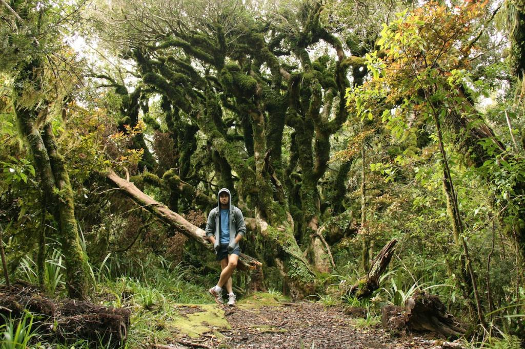 лес новая зеландия фото известного художника нашем микрорайоне стройка