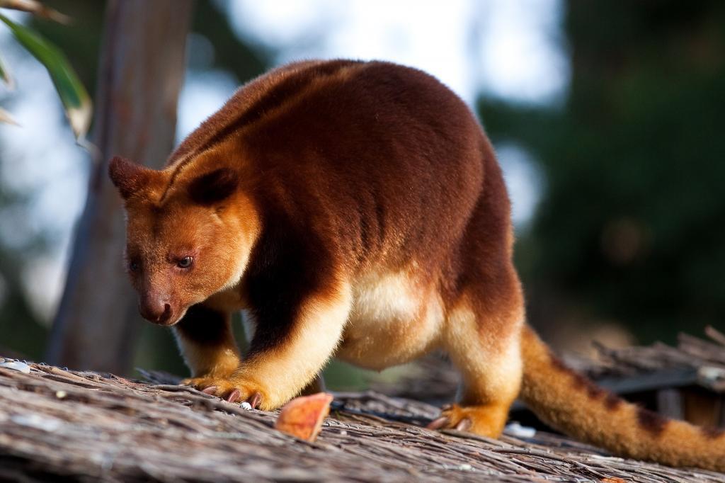 животные живущие в австралии картинки количество камней