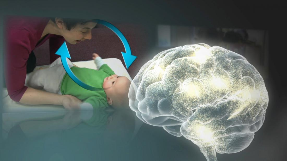 early brain development and learning 5 stages of human brain development posted in blog tweet throughout the lifetime of the human brain it continues to undergo changes let's review each of the.