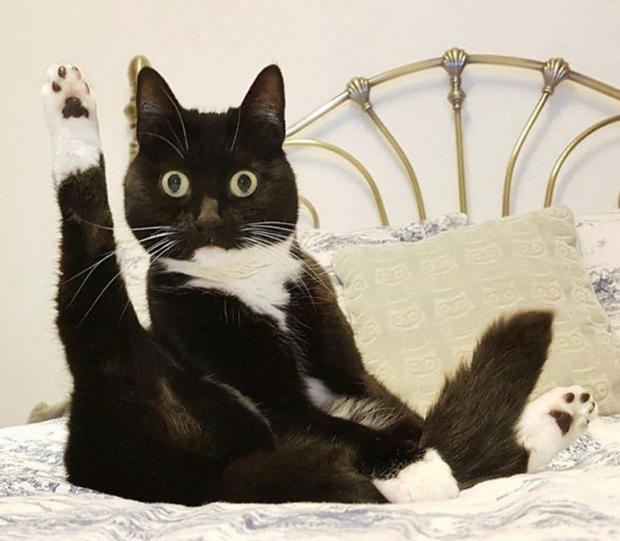 Очень смешные кошки фото