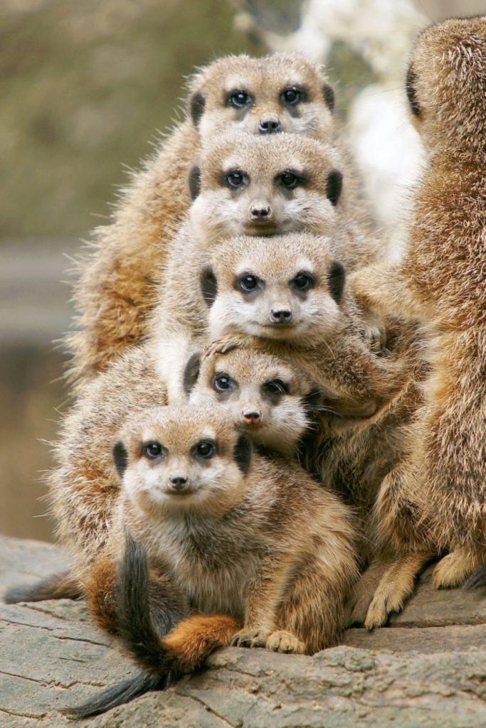 главный приемные семьи животных фото них