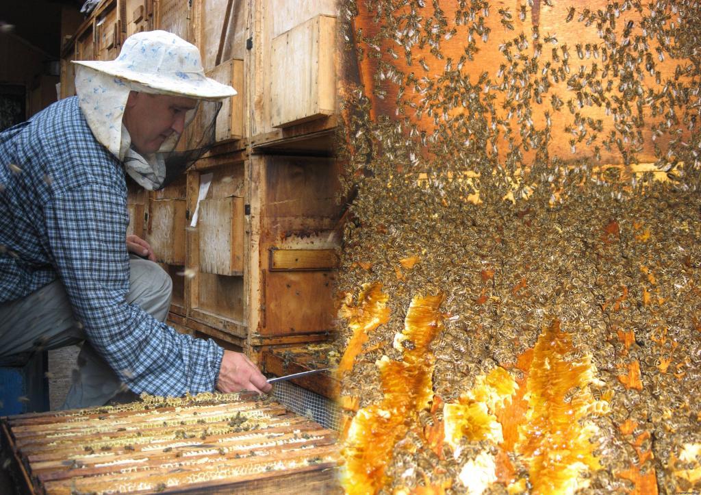 Ученые установили: если пчел перестанут разводить, опылять растения будет некому