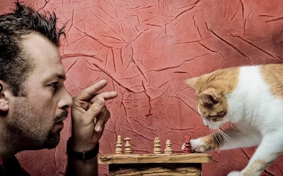 Картинки смешные с кошками и людьми, рецепты