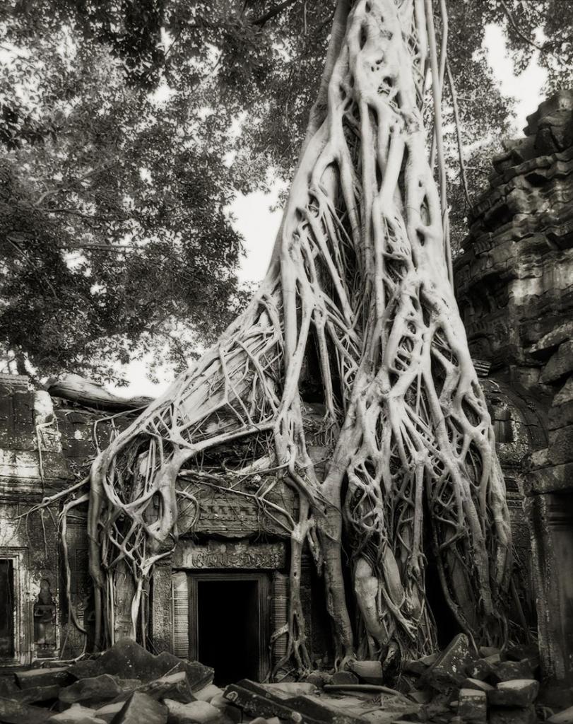 Вот уже 14 лет фотограф из Сан-Франциско Бет Мун ищет самое старое в мире дерево