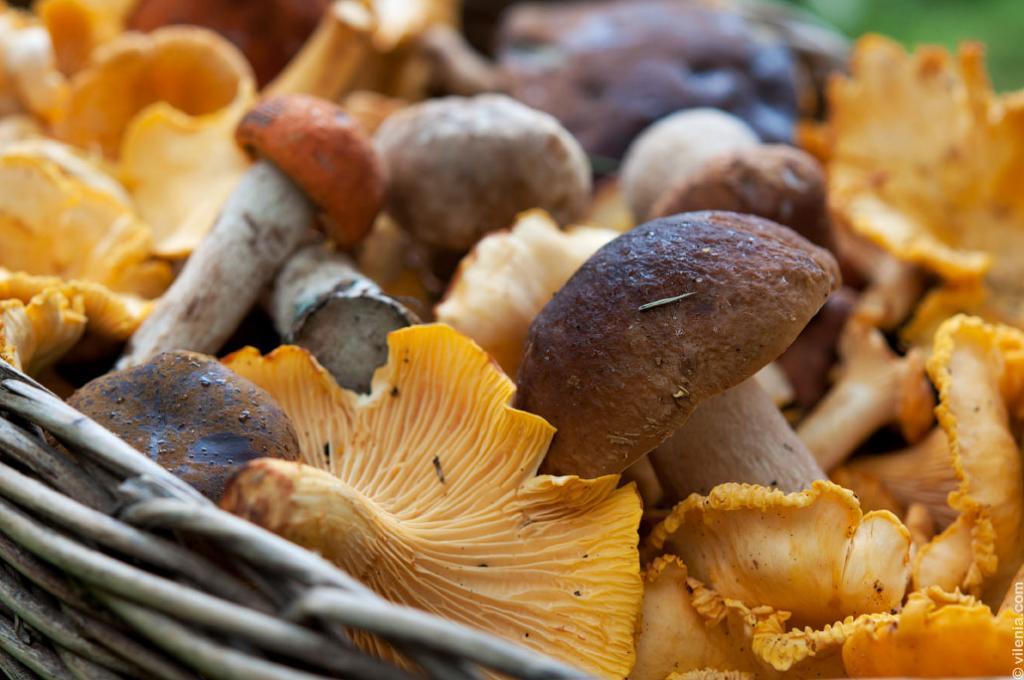 грибы россии фото с названиями пленке экономили