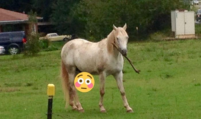 Умом не блещет, но ужасно милый: хозяева самого глупого коня рассказали о его необычных повадках