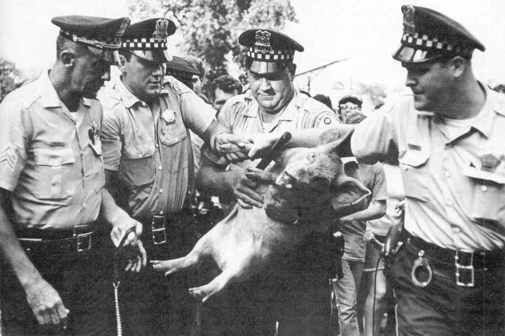 Такое может случиться только в Америке! Животные, которые занимали политические должности: среди них козел, свинья и такса
