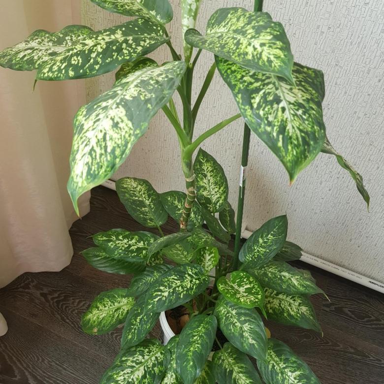 Стоит избавиться от этого немедленно: азалия, лилия, диффенбахия и другие токсичные растения для домашних питомцев