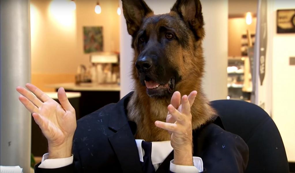 Собаку посадили работать консультантом за стойку информации. Реакция посетителей была забавной (видео)