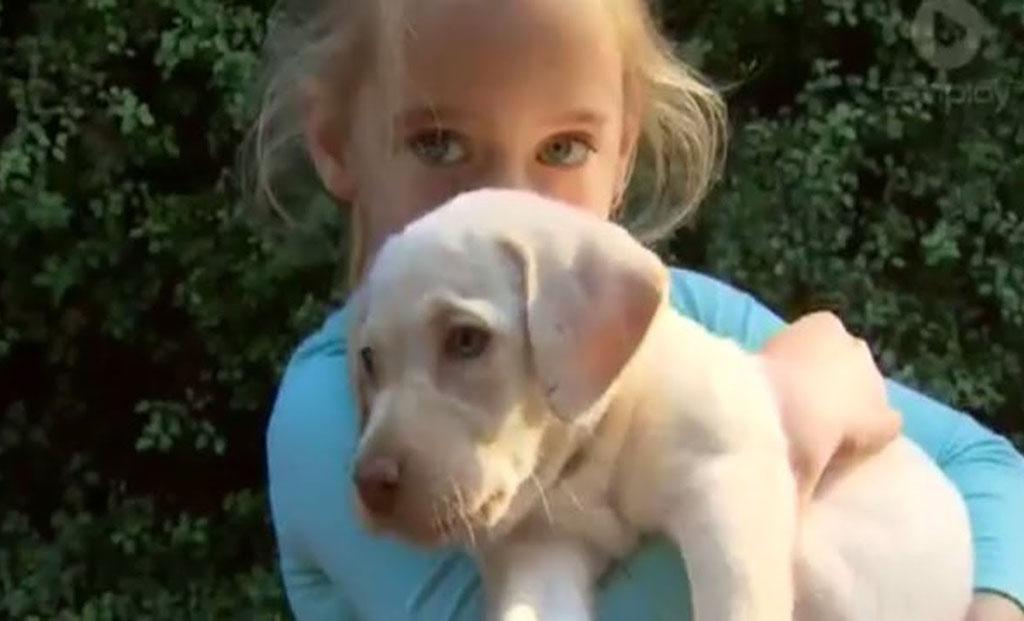 Хозяева щенка придумали, как надавить на его похитителей при помощи публичного заявления