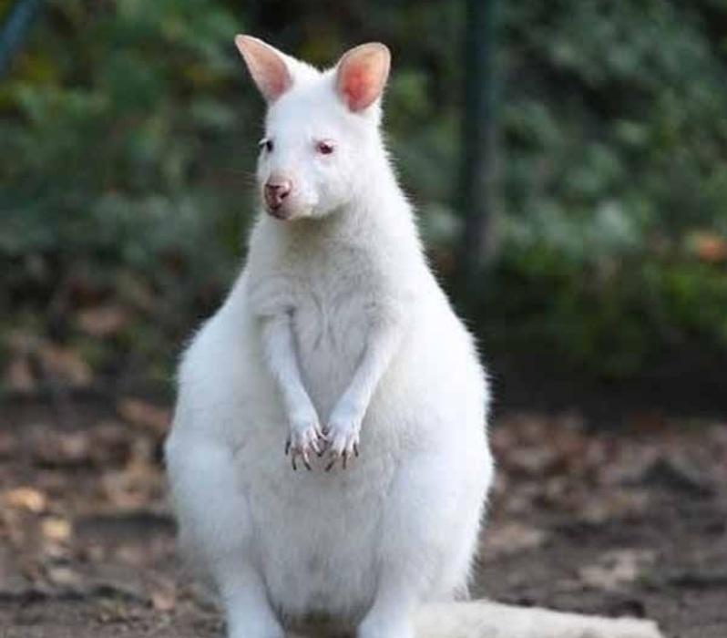 Чужой среди своих. Альбиносы в мире животных: фото