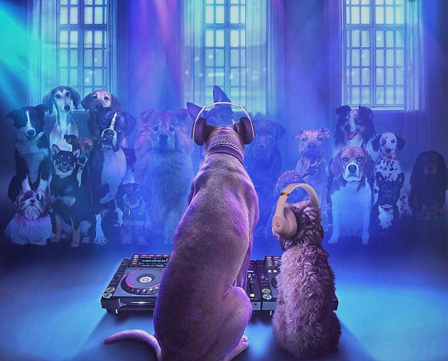 Короли подражания: две собаки, которые могут переплюнуть любого по части косплея