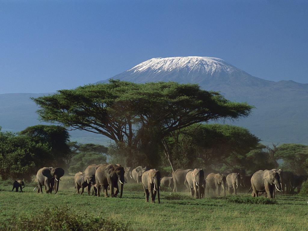 Последние из гигантских слонов: на Земле их осталось не более двадцати