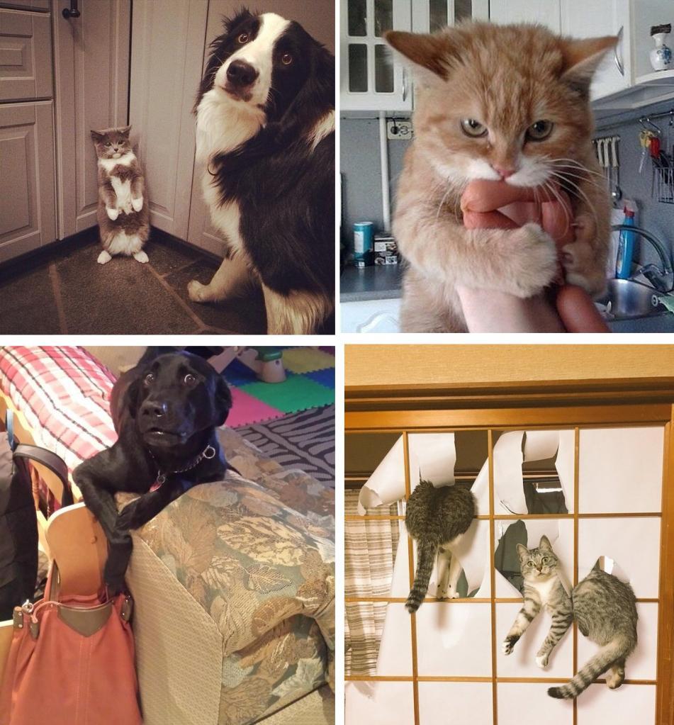 Животные, которые точно не ждали, что хозяин рано вернется домой: фото