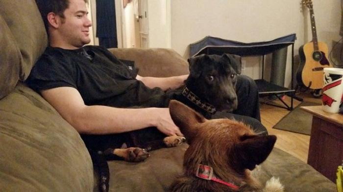 Выброшенного в переноске щенка нашли отец с сыном. Спасенный пес стал настоящим красавцем и другом