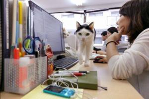 http://fb.ru/media/i/6/4/1/0/6/8/i/641068_300x200.jpg