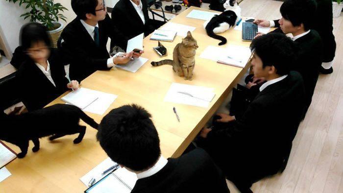 В японских офисах новые сотрудники: компании начали принимать на работу кошек