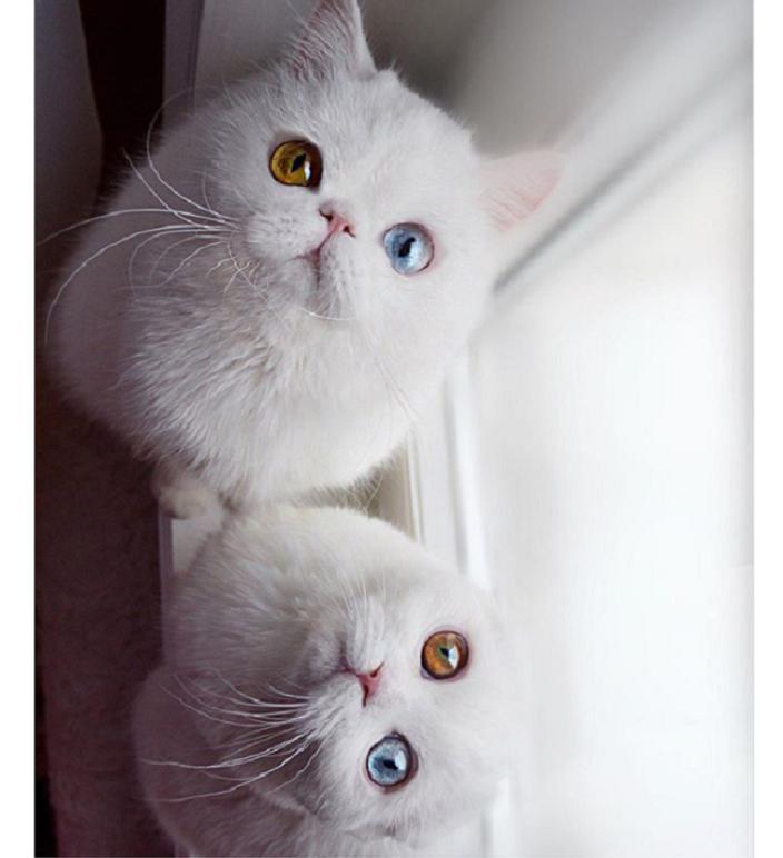У вас был плохой день? Эти коты заставят улыбнуться (фото)