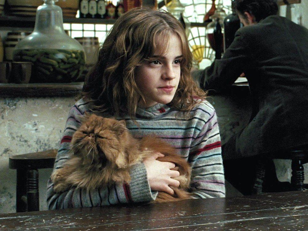 картинки кошка и гарри поттер рэдклифф