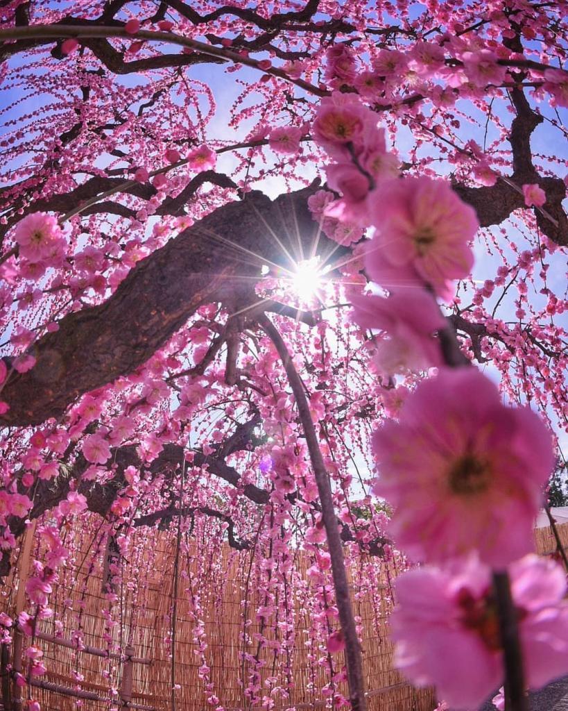 картинки на телефон цветущие деревья приглашаем тебя для