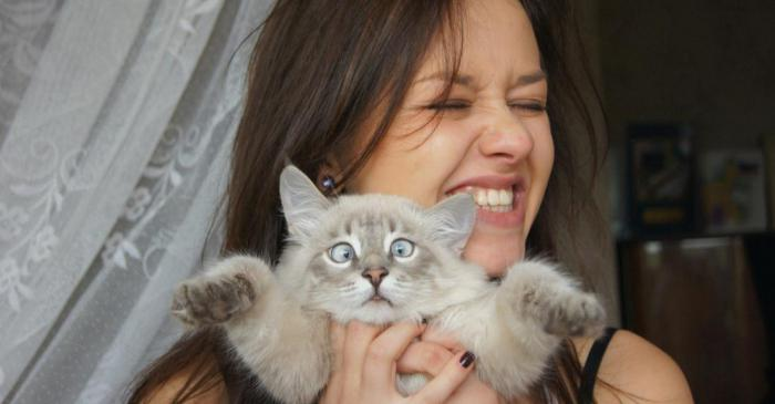 объятия кот царапина