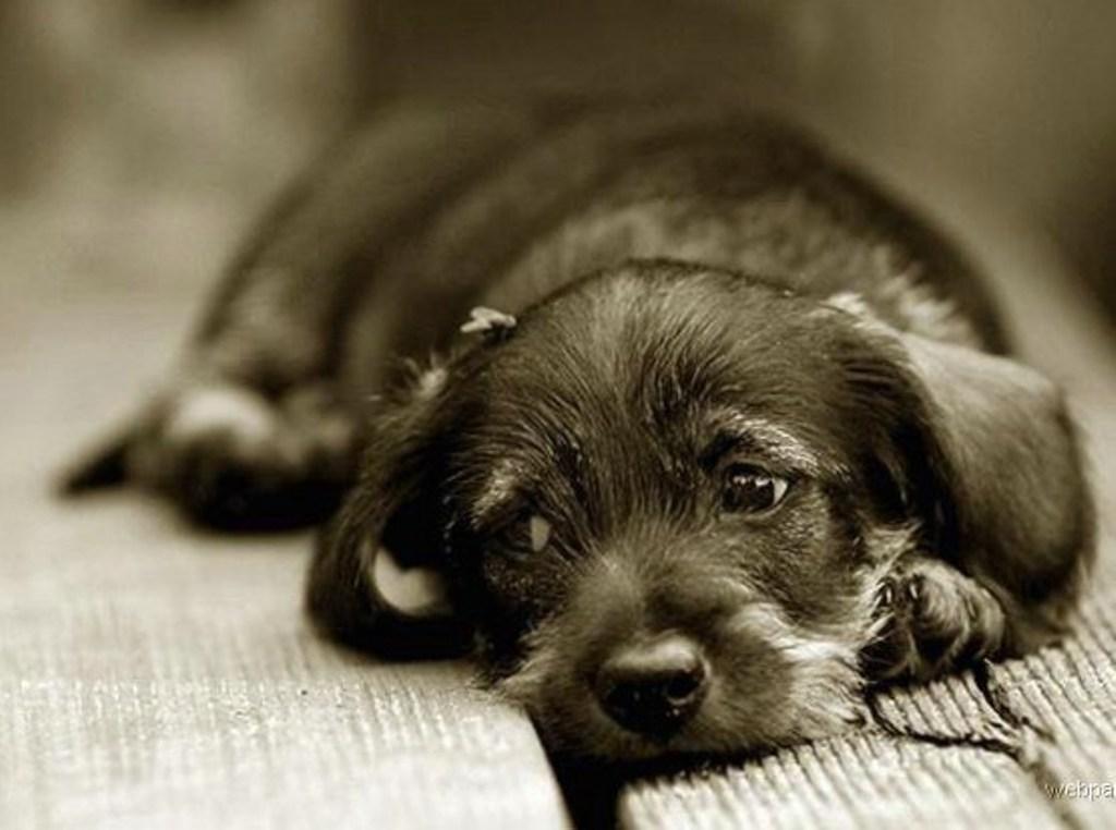 Один дома: на сколько времени можно оставлять собаку саму в квартире