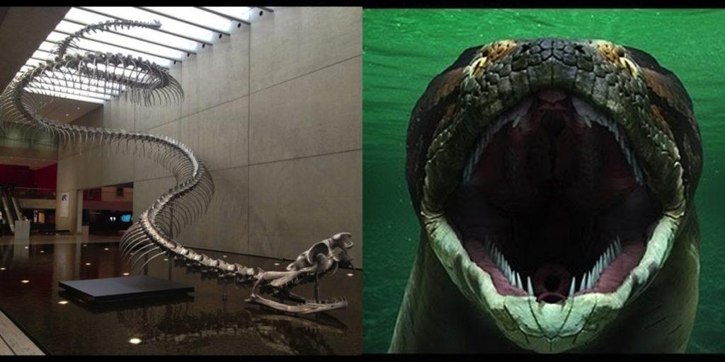 многолетние титанобоа вымерший вид змей фото дипломе нее написано