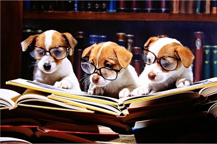 С собакой в школу: специалисты предлагают использовать собак для улучшения психологического климата в образовательных учреждениях