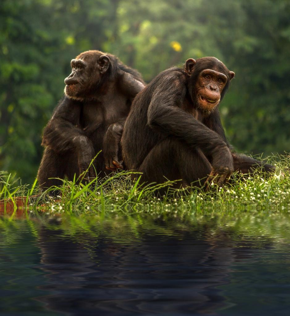 Их чувствам можно только позавидовать: 8 главных романтиков животного мира