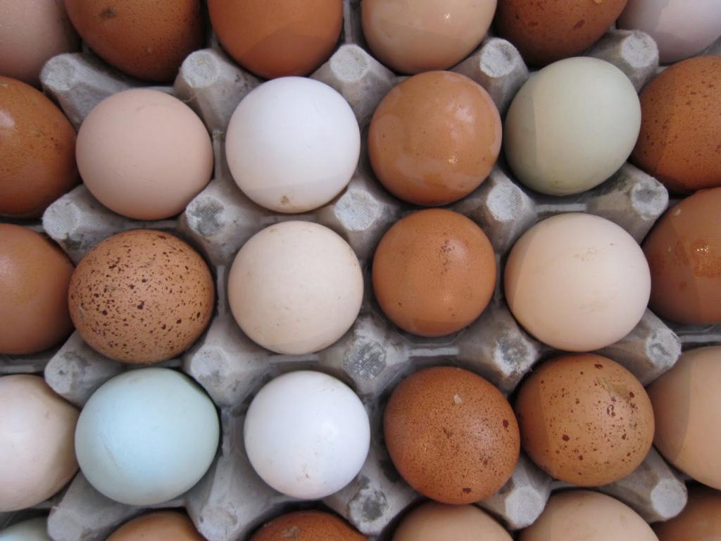Почему яичные желтки бывают разного цвета: настоящая причина