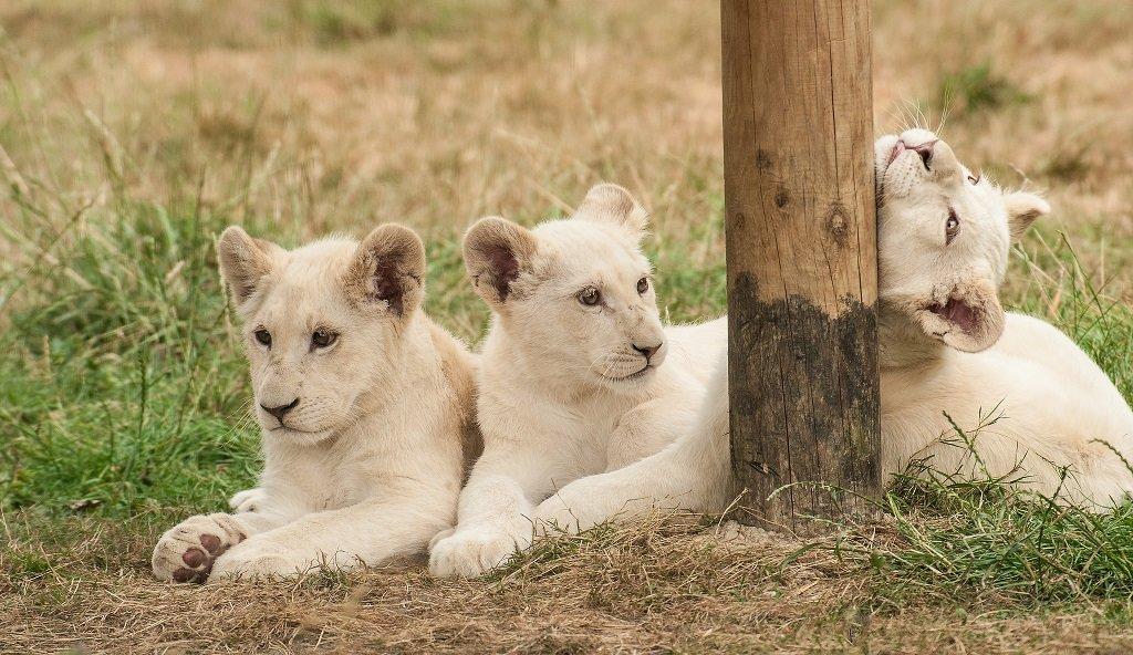 Экзотические питомцы: 10 дорогостоящих животных на планете