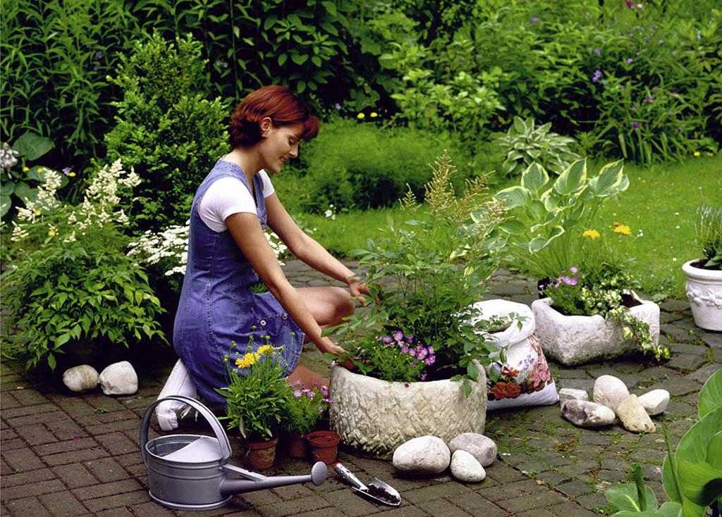 Фото растений сажаемых в садоводствах