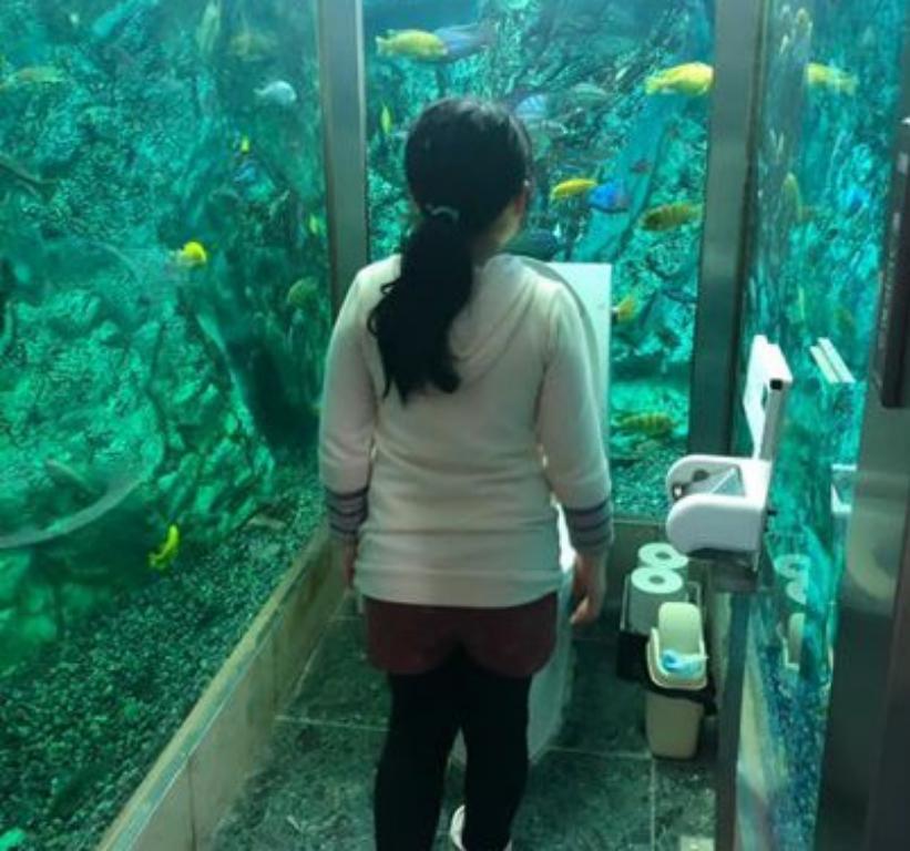 Подглядывать запрещено: в японском кафе придумали развлечение для посетителей - туалет-аквариум