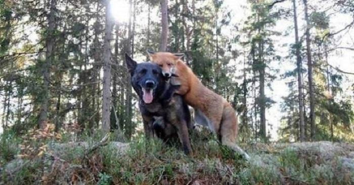 Его собака каждый день убегала в лес. Однажды хозяин решил проследить за псом и увидел его в компании необычного друга