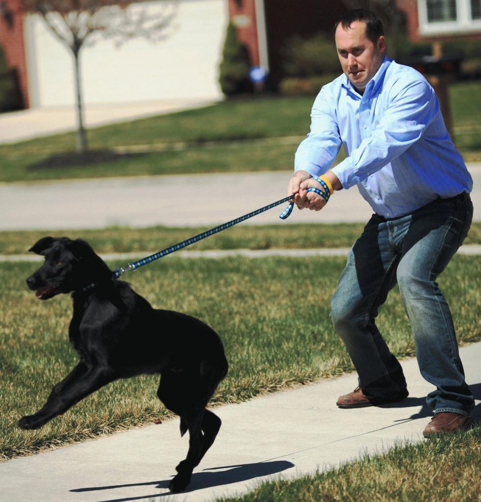 Как приучить собаку, чтобы она не убегала и всегда оставалась во дворе