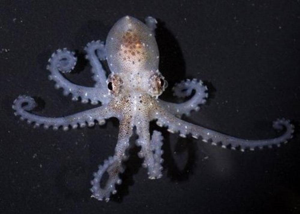 Неужели их используют только для получения краски? 8 осьминогов, красота которых достойна кисти художника