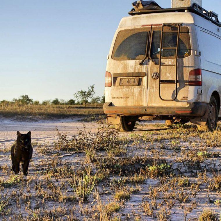Бросил работу и продал имущество: мужчина кардинально изменил жизнь, чтобы путешествовать с кошкой