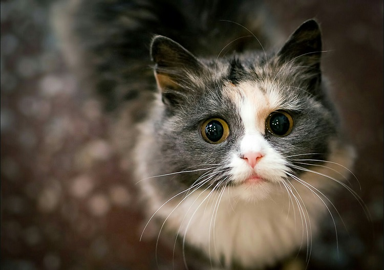 Что делать, если кот ночью не дает спать и сводит с ума хозяина: причины и решение проблемы