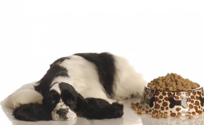 ветеринар питомец помощь