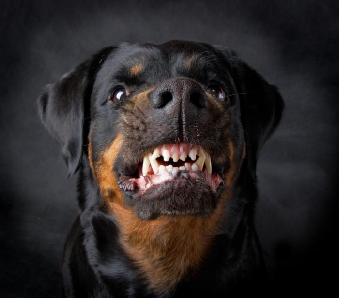 собака нападение советы