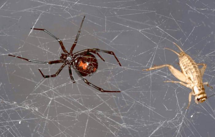 исследование свойств паутины