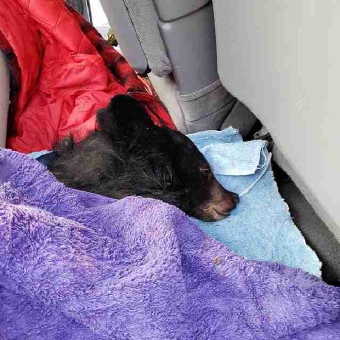 Чудесное спасение: мужчина помог медвежонку, который попал в трудную ситуацию