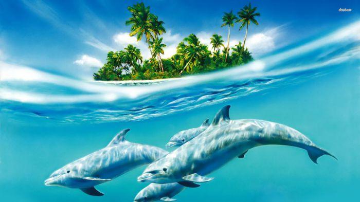 10 умопомрачительных фактов о дельфинах